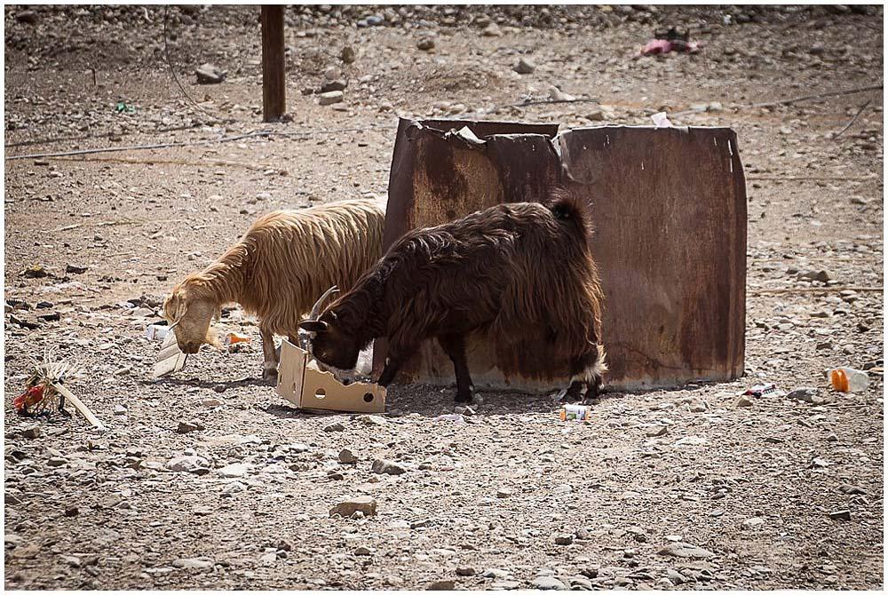 Reisebericht_Oman_LittleBlueBag_Reiseblog-0004
