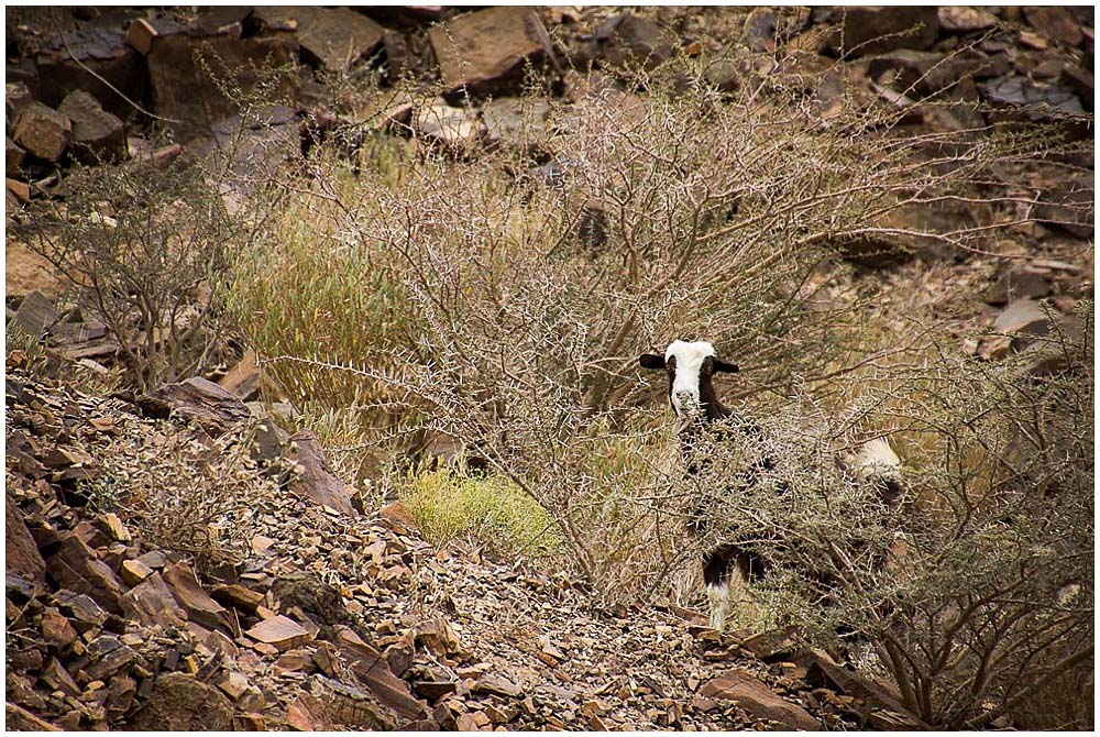 Reisebericht_Oman_LittleBlueBag_Reiseblog-0005