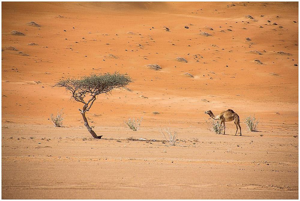 Reisebericht_Oman_LittleBlueBag_Reiseblog-0007