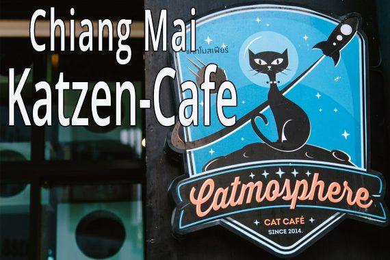 Katzencafe in Chiang Mai
