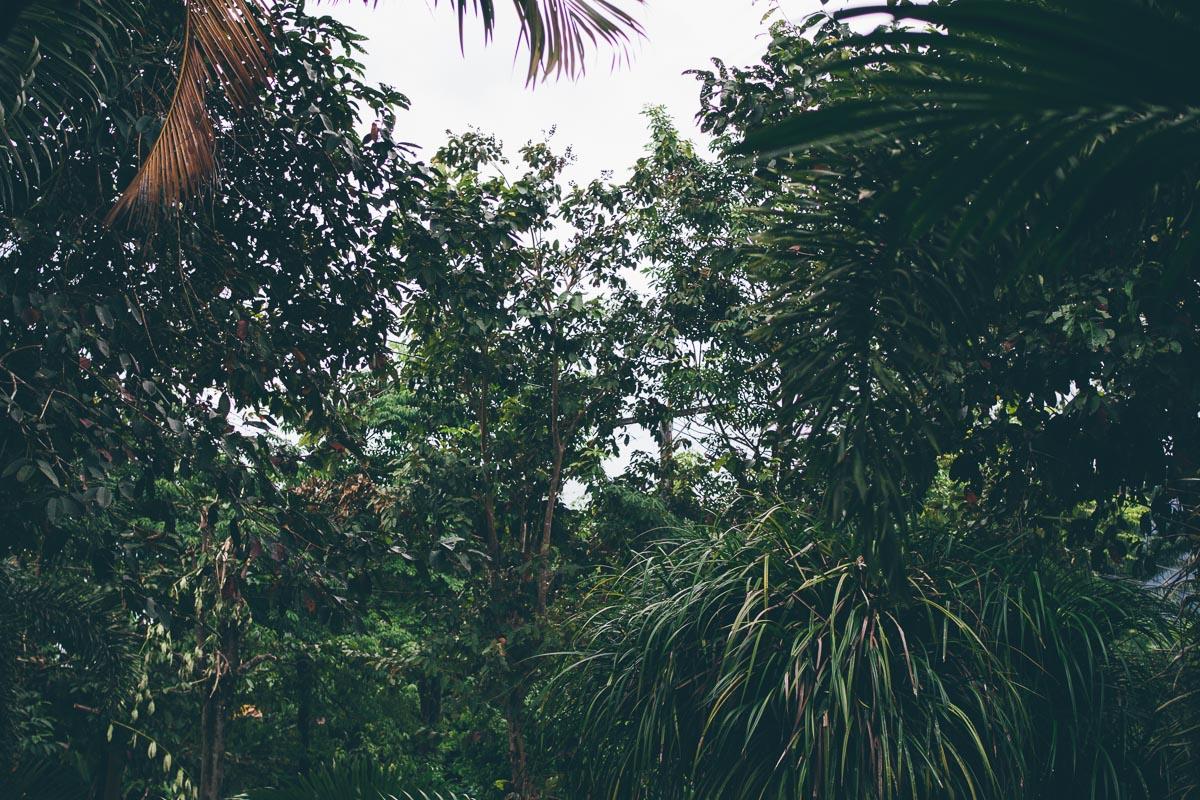 Junglefeeling