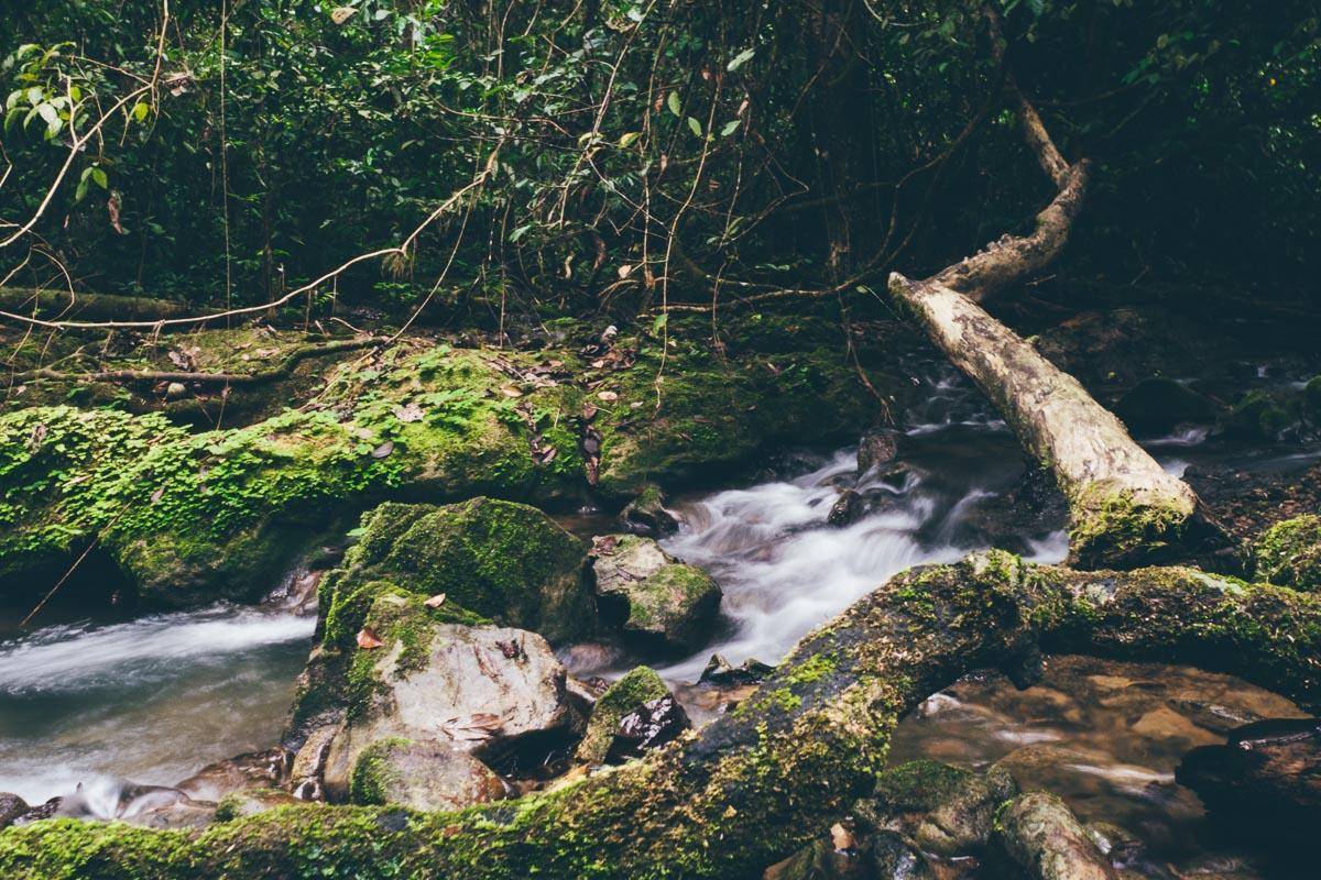 Khao Sok Dschungeltrip