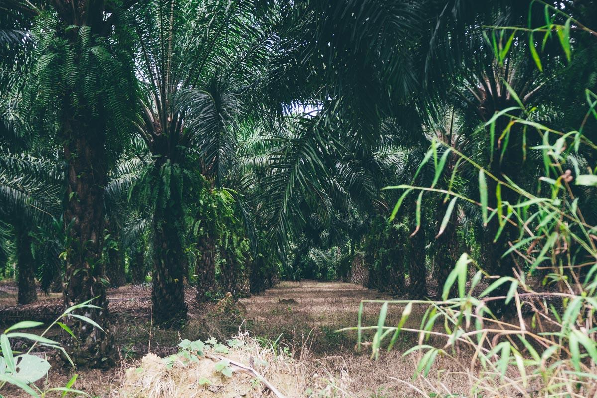 Dschungel Suratthani