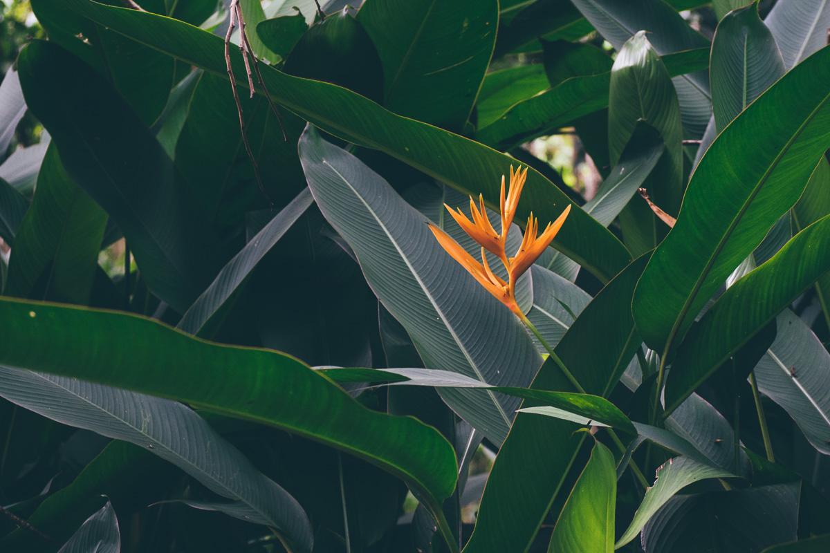 Botanik Khao Sok