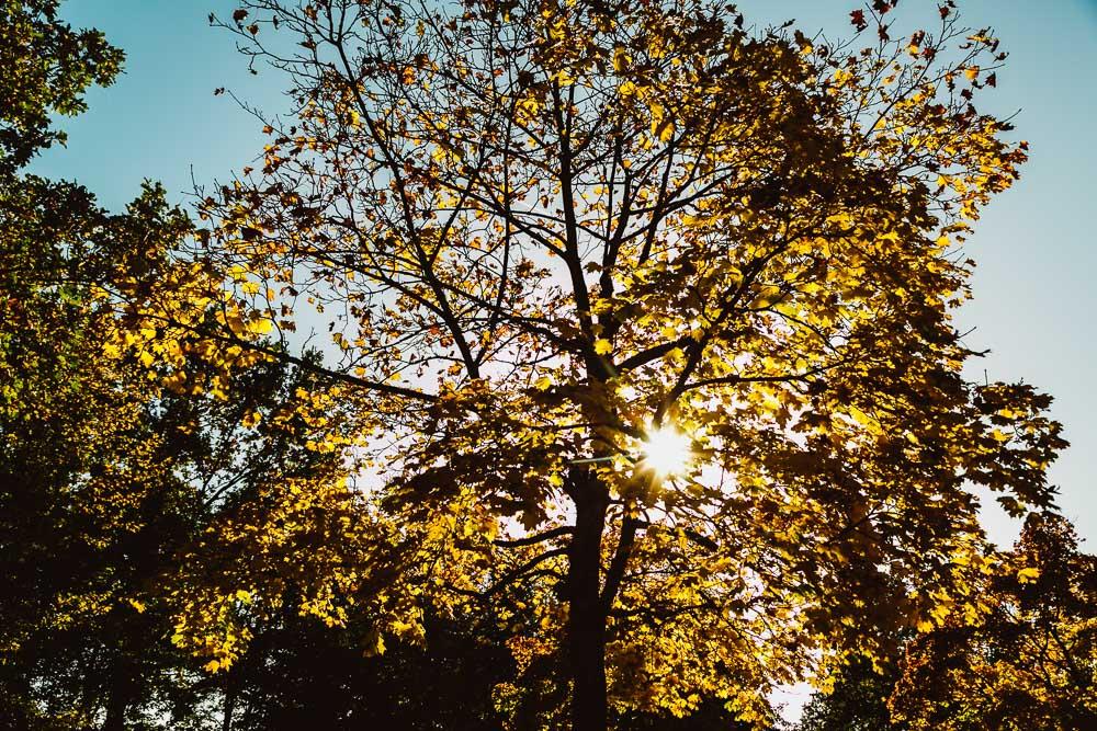Herbstsonne fotografieren