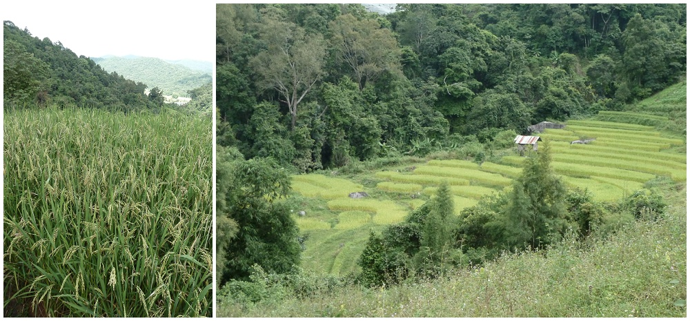 Doi Inthanon Trekking Chiang Mai