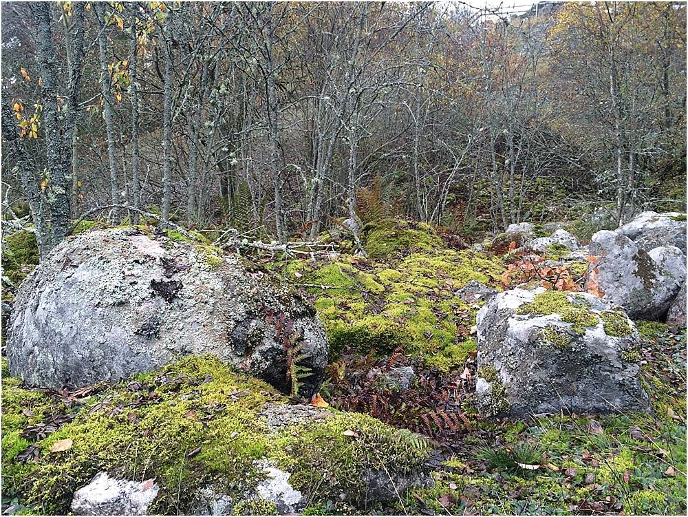 Naturreservat Kvismaren