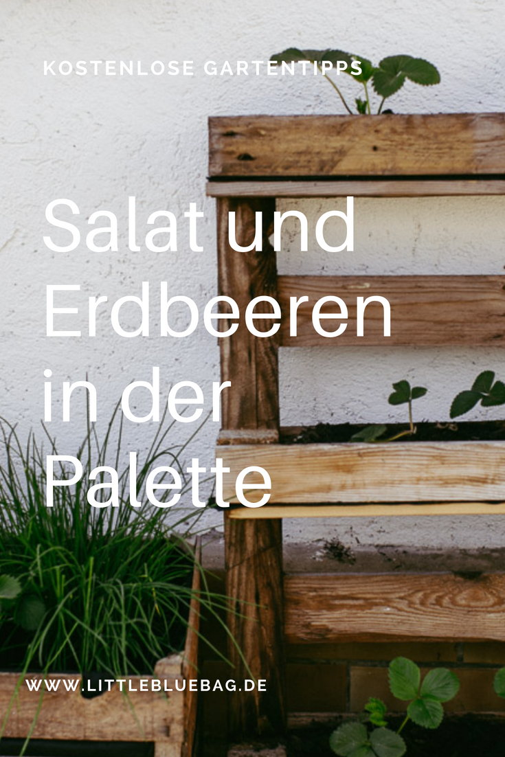 salat oder erdbeeren in der palette pflanzen reise und fotografieblog littlebluebag. Black Bedroom Furniture Sets. Home Design Ideas