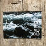 LittleBlueBag Postkarte 15 wild world