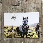 LittleBlueBag Postkarte 17 Hi! Islandpony